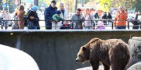bear-at-zoo