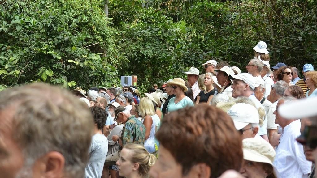 big-crowd-awaiting-orangutans