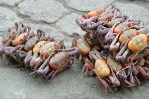 Crabs for sale, they are tied up and sold live.