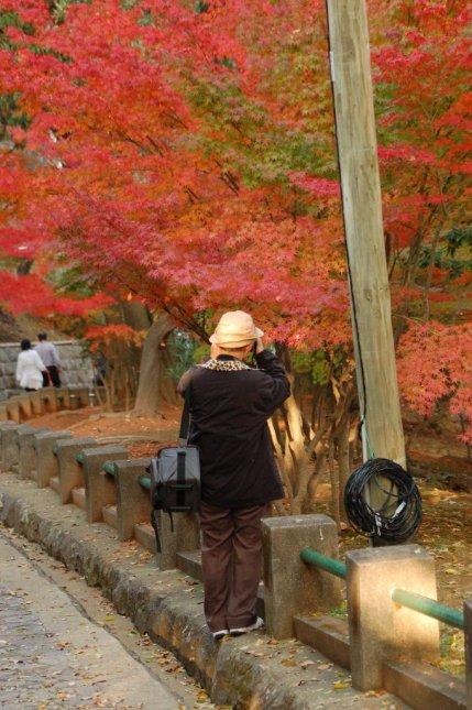 Autumn Colors in Nagasaki, Japan