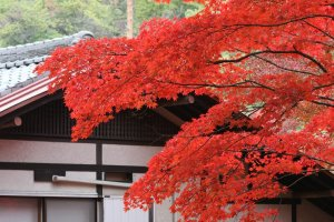 itsukushima_autumn_leaves_japan