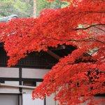 itsukushima_autumn_leaves_japan