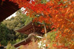 Kyoto_Autumn_Leaves_Photo