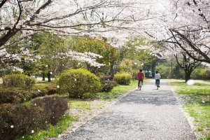 showa_memorial_park_in_spring