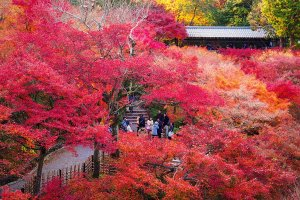 tofuku-ji_autumn_leaves_kyoto