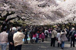 strolling_around_hanami_ueno_park_tokyo