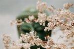 Japan's Four Seasons