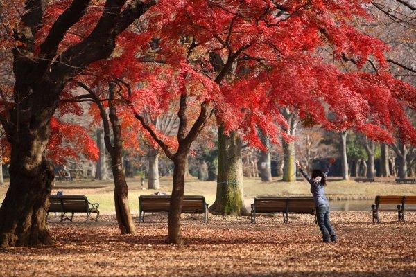 yoyogi_koen_autumn_leaves