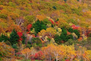 hachimantai_fall_colors_tohoku