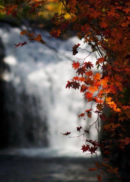 waterfall_autumn_leaves_akita