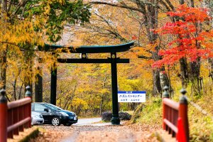 fall_foliage_nikko