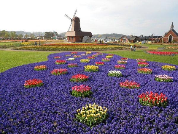 flower_bed_kamiyubetsu_tulip_park