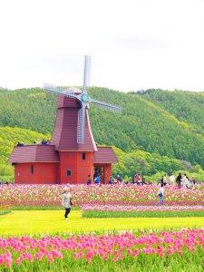 kamiyubetsu_tulip_park_hokkaido