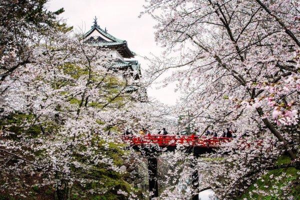 hirosaki_castle_and_red_bridge_aomori_tohoku