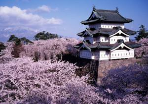 hirosaki_castle_cherry_blossoms_aomori_japan