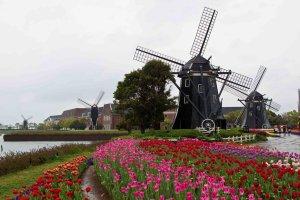 huis_ten_bosch_tulip_garden