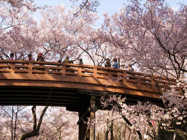 ounkyo_bridge_and_cherry_blossoms