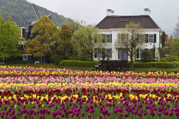 tulips_huis_ten_bosch_in_nagasaki_japan