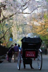 kakunodate_samurai_district_sakura_blossom