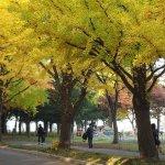 hokkaido_university_fall_foliage