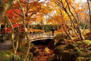 autumn_leaves_hakone_museum_of_art