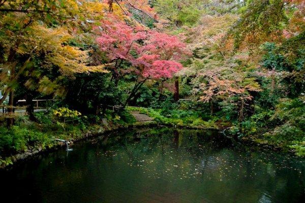 autumn_leaves_kamakura