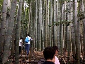 hokokuji_temple_grove_kamakura