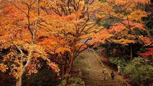 muroji_temple_fall_foliage_nara