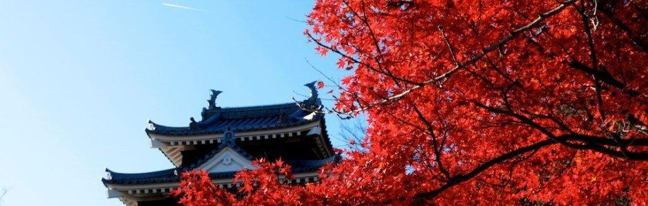 Autumn Leaves in Aichi   Koyo 2016