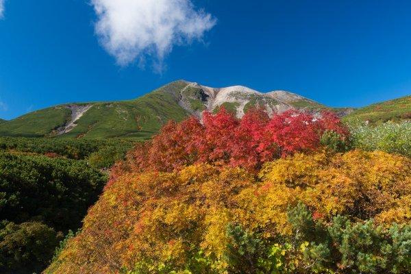 mount_norikura_autumn_leaves