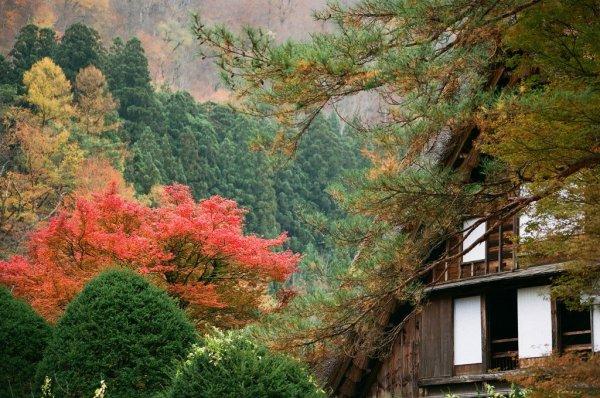 wada_house_shirakawago_in_autumn
