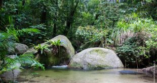 Mossman gorges rainforest