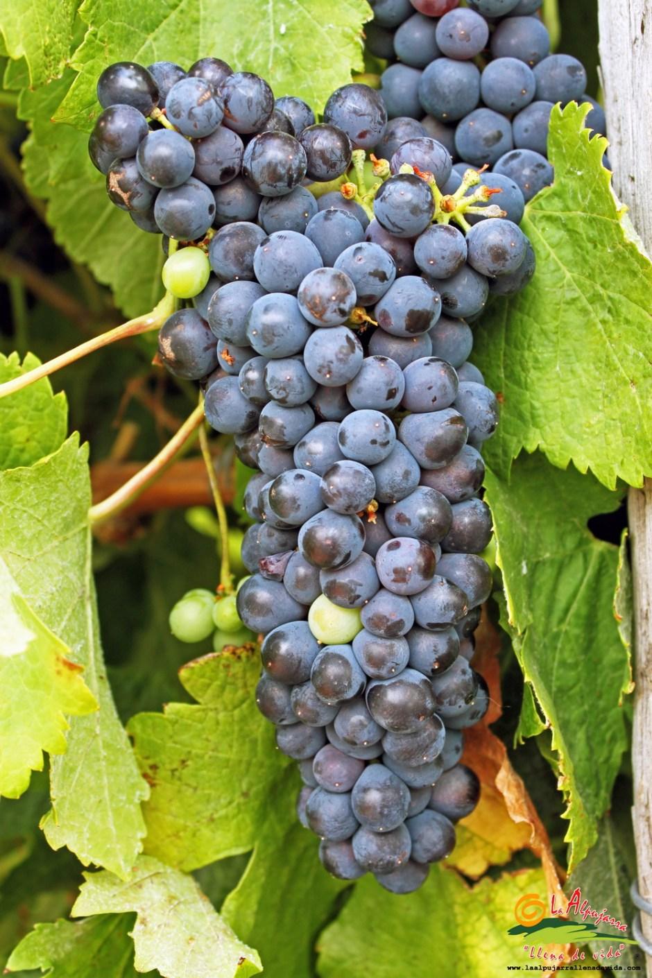 Donde nace el vino…