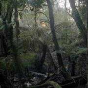 La foret pluviale tropicale australienne