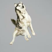 Le vol majestueux des chiens