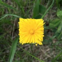 Une coupe au carré pour des fleurs
