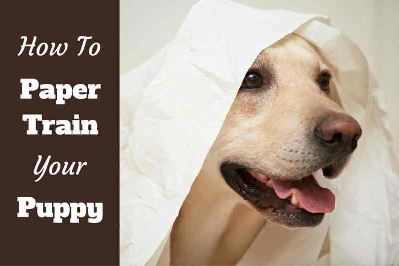 Large Of Putting A Dog To Sleep With Benadryl