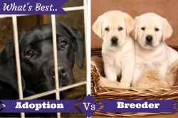 Thrifty Adoption Vs Breeder Below A Lab Can Dogs Eat Popcorn Can Dogs Eat Popcorn Yahoo A Cage Puppies Adoption From Shelter Buying From A