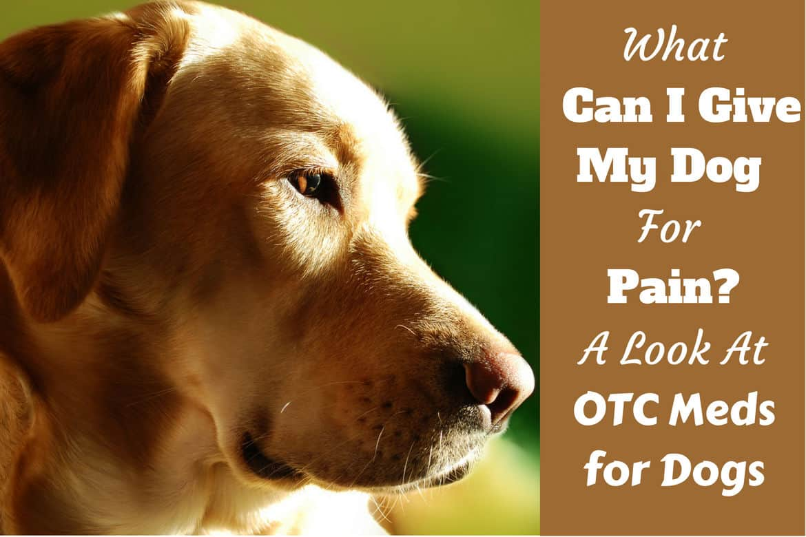 Hairy A What Can I Give My Dog Pain Written Beside A Lighted Side Portraitshot Dogs Can You Give Dogs Benadryl To Help M Sleep Can You Give Dogs Benadryl Capsules What Can I Give Dog Otc Pain Medicati bark post Can You Give Dogs Benadryl