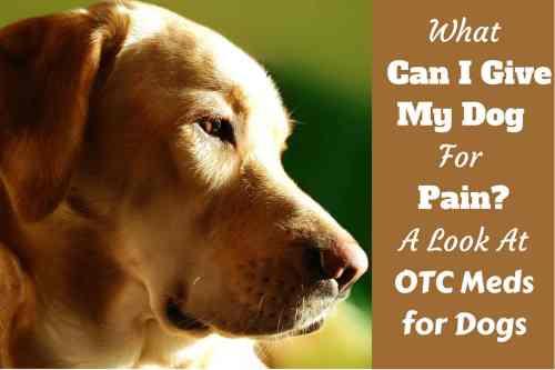 Medium Of Can You Give Dogs Benadryl