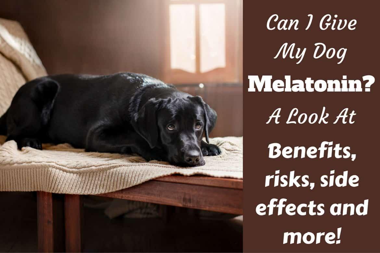 Fullsize Of Can Dogs Take Benadryl