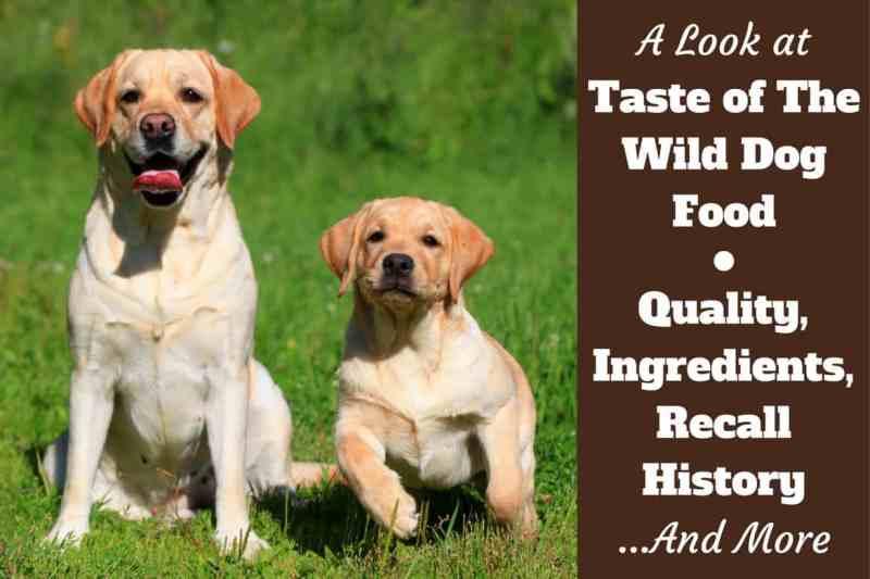Large Of Low Energy Dog Breeds
