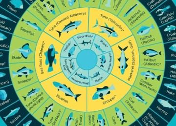 Cómo consumir pescado sin mercurio [Infografía]