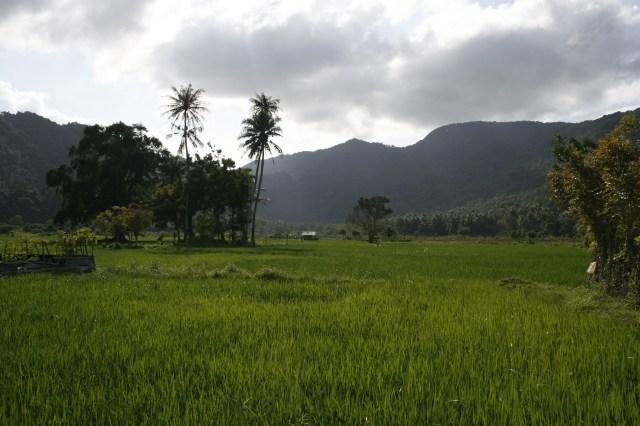 rizières - Banda Aceh