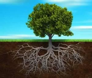 Arbol verde y raíces