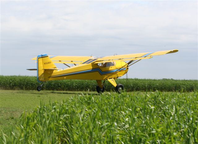 Kitfox in the Oklahoma Wheat