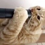 gatto si diverte lingua nell'aspirapolvere03