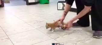 Gatto paralizzato, si muove con le rotelle di Lego5
