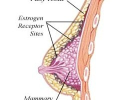 Essential Hormones For Breast Development