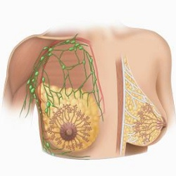 Common Breast Diseases And Their Symptoms